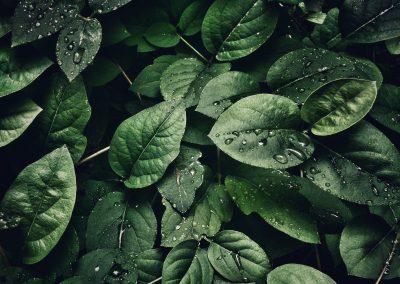 Trouver le nexus: explorer l'adaptation et l'atténuation des changements climatiques